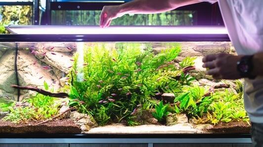 Aquariumabdeckung aus Acrylglas - eine günstige und bequeme Alternative zu Glas!